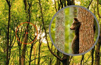 Бинокль CANON и Нож Gerber Bear Grylls - увеличение в 60 крат
